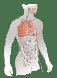 Toxicité poumons