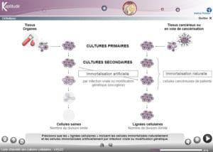 Carte d'identité des cultures cellulaires