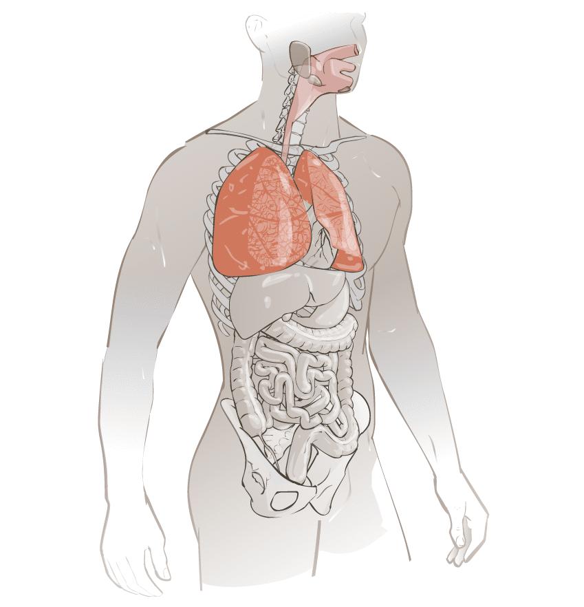 Agents Biologiques Voie Respiratoire